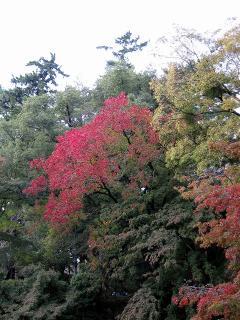 岡崎公園の紅葉