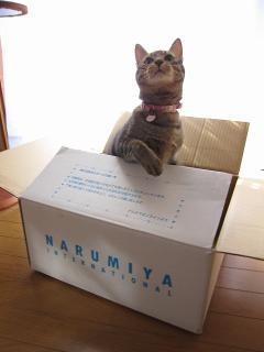 箱からネコ