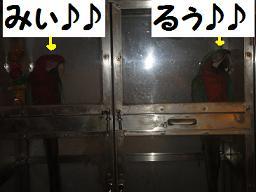 みぃ&るぅ