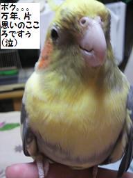 2010102100090001.jpg
