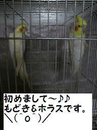 2010120621450000.jpg