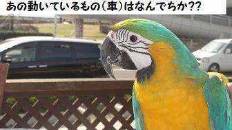 キョロお散歩デビュー2