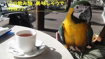 キョロお散歩デビュー3