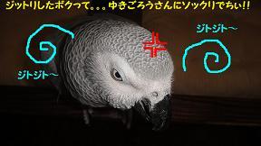 ジットリ○3
