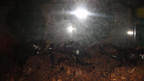 孵化した甲虫