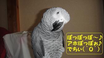 アホぽっぽ~○