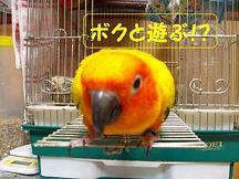 8ちゃん4