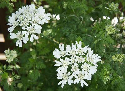 白いお花がかっこいい♪
