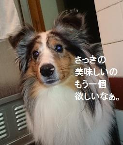 DSC_4299.jpg