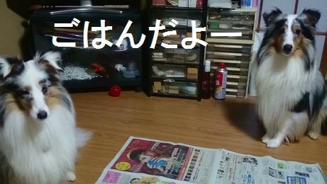 MOV_3531(1).jpg