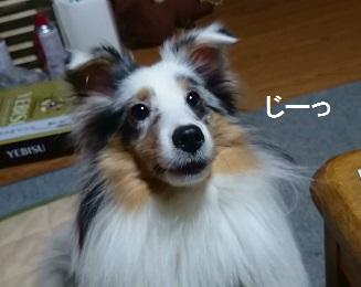 MOV_5050(3).jpg