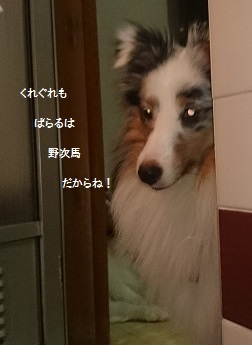 img_5123.jpg
