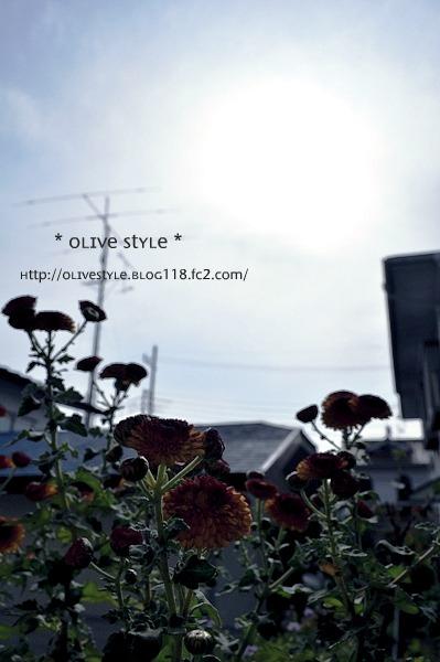 2010.11 ブログ用フォト 011