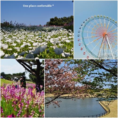 2011,4 hitati海浜公園 003