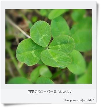 2011.6 ブログ用フォト 002