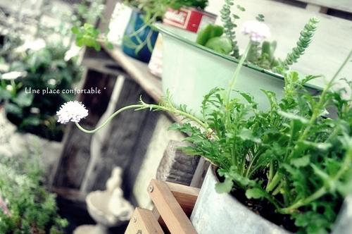 2011.6 ブログ用フォト 009