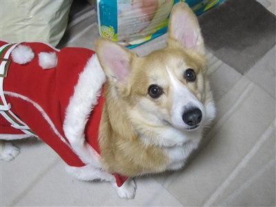 2011クリスマス2