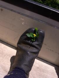 地下足袋花