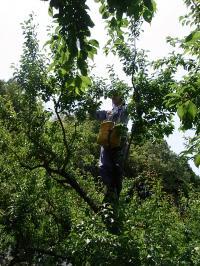 木のぼり田本さん