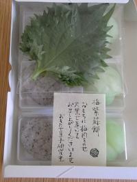 梅紫蘇 青梅箱