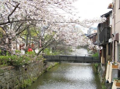 祇園白川のサクラ02