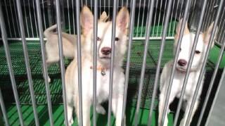 動管子犬 (2)
