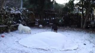 雪すんガク