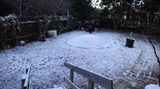 雪ガクうんち