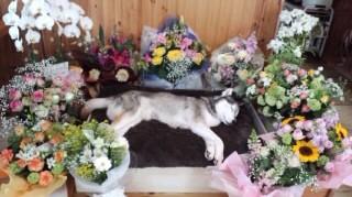 棺とお花3
