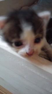 子猫ロンダちゃん