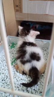 子猫トイレ