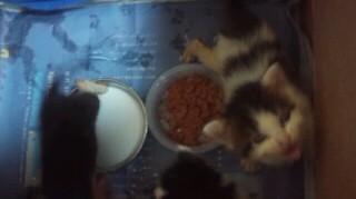 子猫ご飯ふんずけ