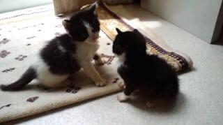 子猫パンリン違い