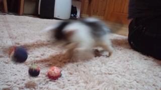 ロンボール遊び1