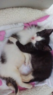 子猫リンダ上2