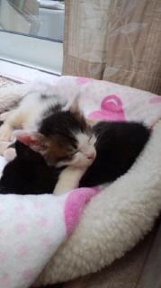 子猫ロンダ上2