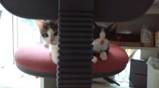子猫   椅子