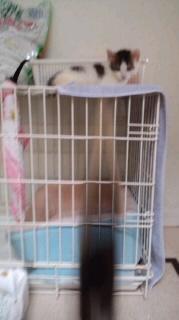 子猫リンダジャンプ