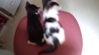 子猫椅子2
