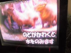 1304kapibara_2.jpg