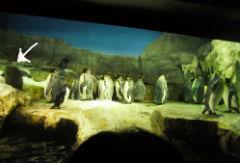 penguin1304_3.jpg