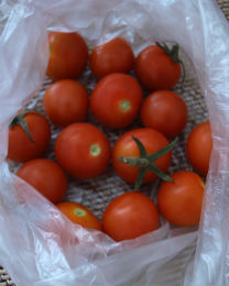 tomato130806.jpg