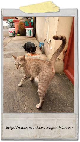 cat11071502