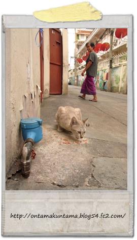 cat11071503
