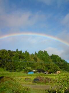 29日口蹄疫後、初のセリそして虹