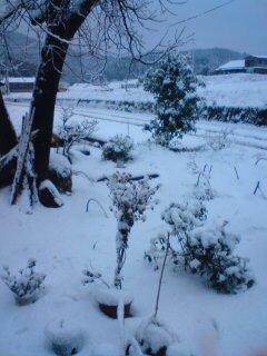 すっごい大雪