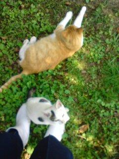 猫ガーデン