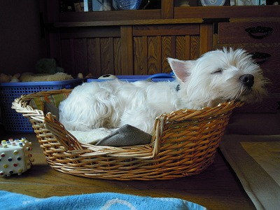 だいの籠で寝るエース