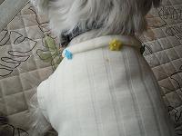 襟のボタン