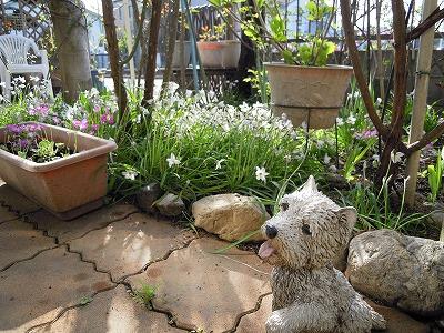 お庭のむぐ